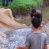 2019: Ponds and fish for children from Monoshapara